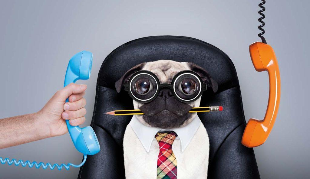 Hier sehen Sie das Bild einer witzigen Bulldogge mit Brille am Schreibtisch und einem Bleistift im Maul.